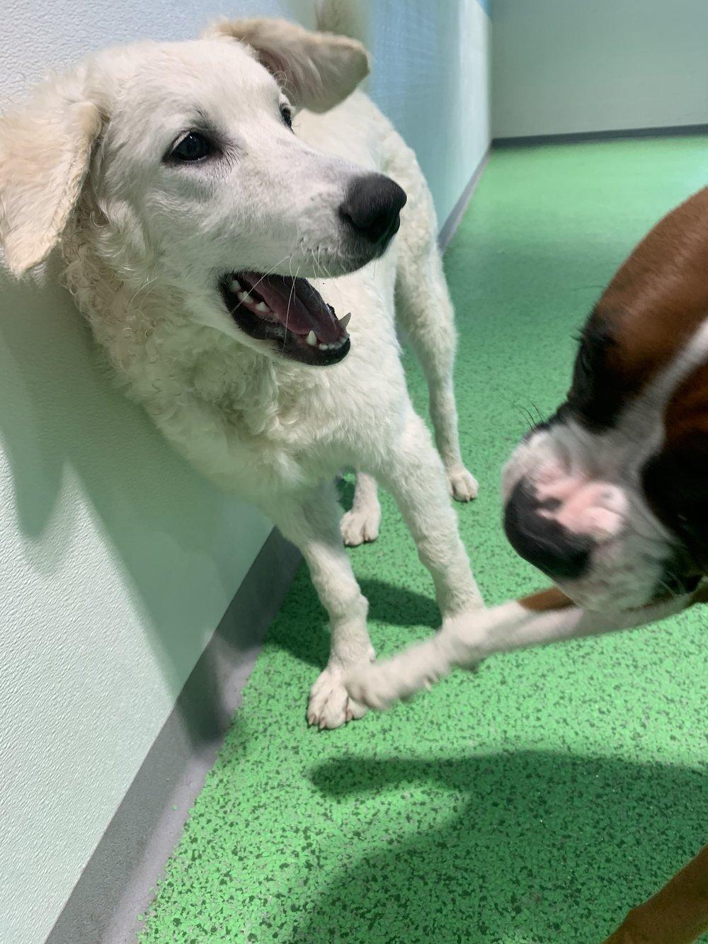 Dog Training Hanover MA