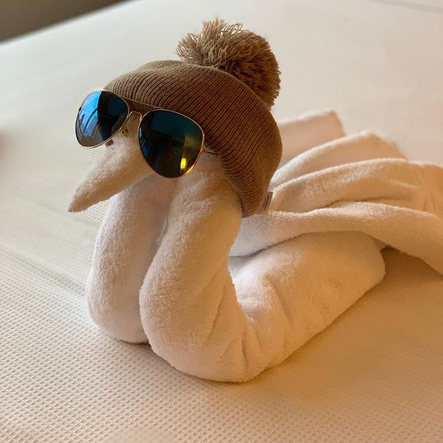 I don't know what's cooler, this swan created by a rockstar housekeeper (and photographer!) or Chicago coming off of -50 wind chills! Come stay at the Hyatt Place River North with our warm touches during stayover service! #chiberia #towelanimals #swanswagger #passionliveshere #whitelodging