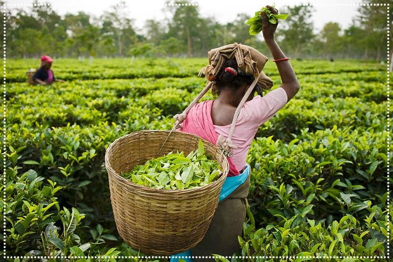 Té en hebras del mundo - Descubrimos el sabor de cada región a través de sus hebras de té, su historia de la mano de sus aromas, sus colores...Nuestros blends de té invitan a recorrer sabores que estimulan nuestros sentidos. Sabores que energizan, sabores que relajan, sabores que concentran, sabores que armonizan.