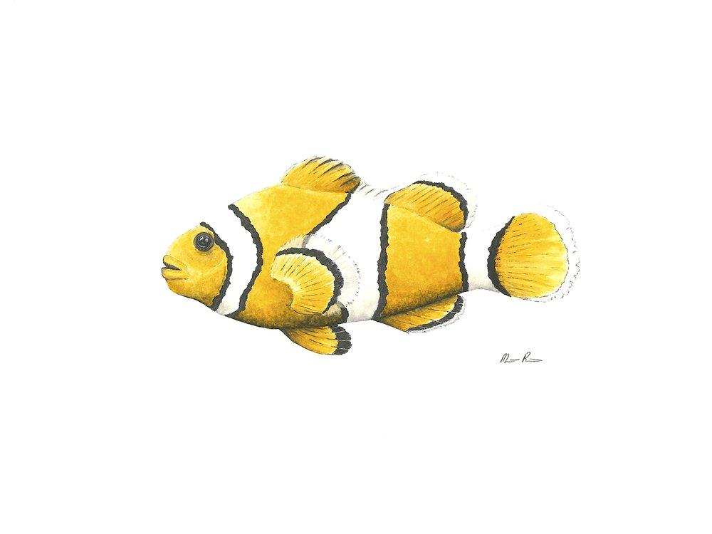 Clown Fish - 12'' x 9''$250