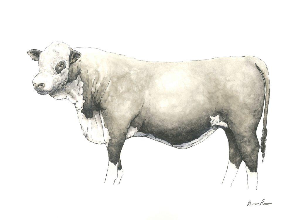 Cow - 12