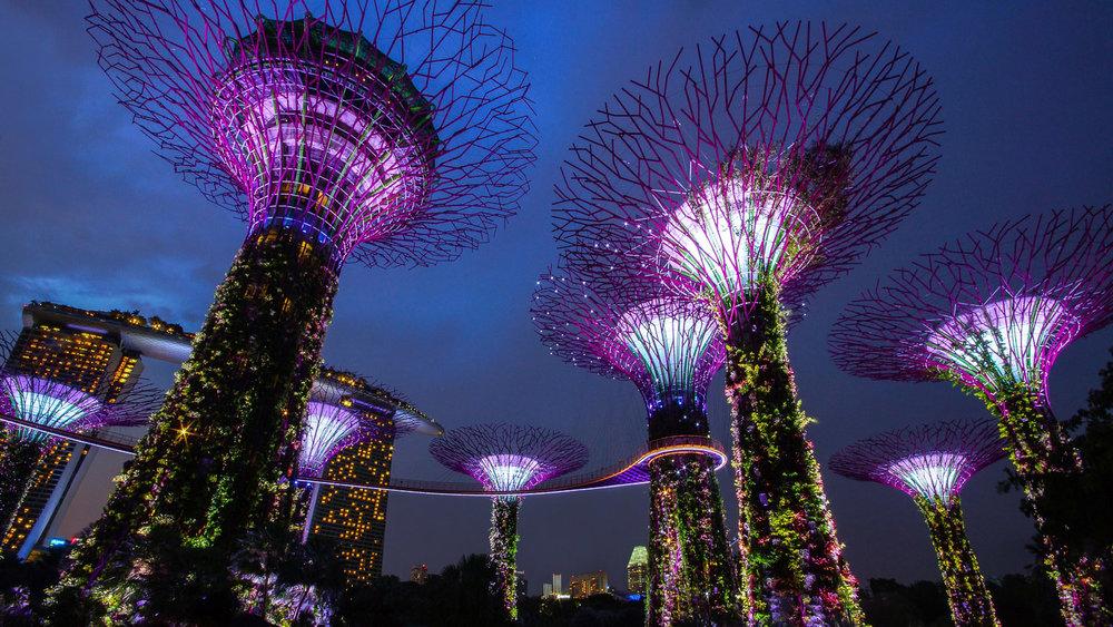 Singapore's Supertree Grove at night. Image:   Jason Goh