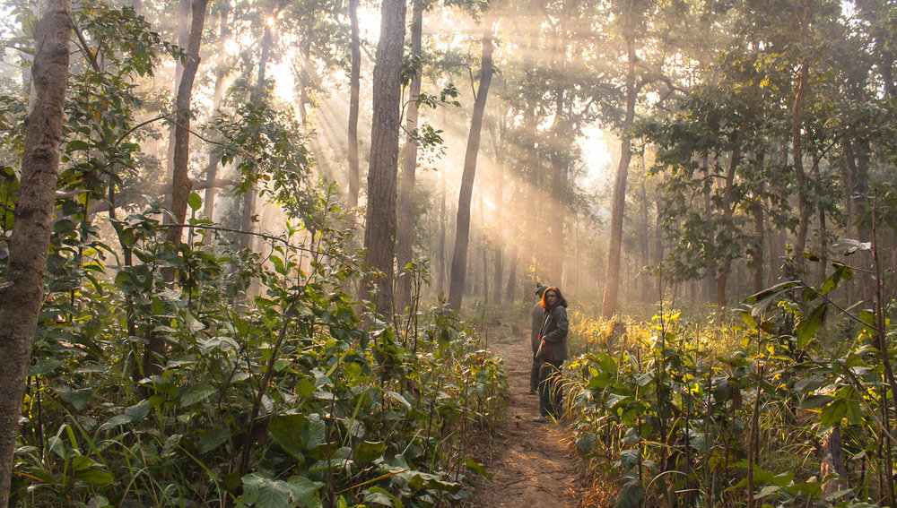 A morning walk in Bardia National Park.  Image:  © Alan Williams