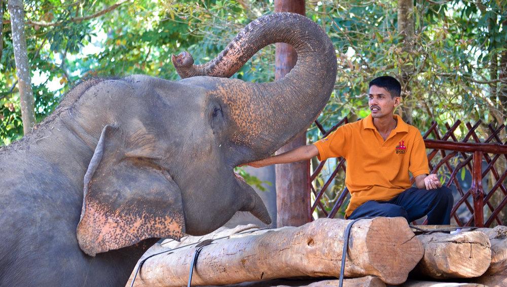 Feeding time at an elephant sactuary in Sri Lanka. Image:     Mohamed Nuzrath