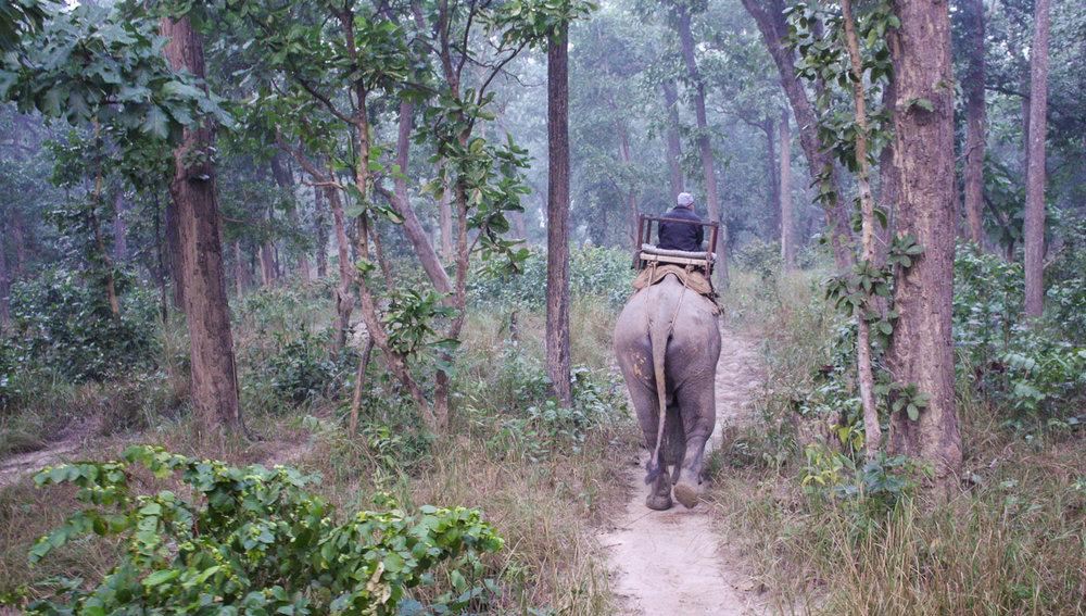 On safari in the Bardia National Park, Nepal. Image:  © Alan Williams