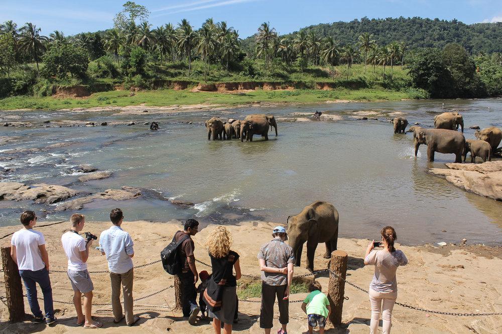 Pinnawala Elephant Orphanage in Sri Lanka. Image:  © Alan Williams