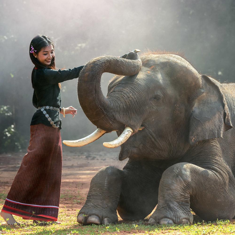 The Asian Elephant Symbol Of A Continent Xyzasia