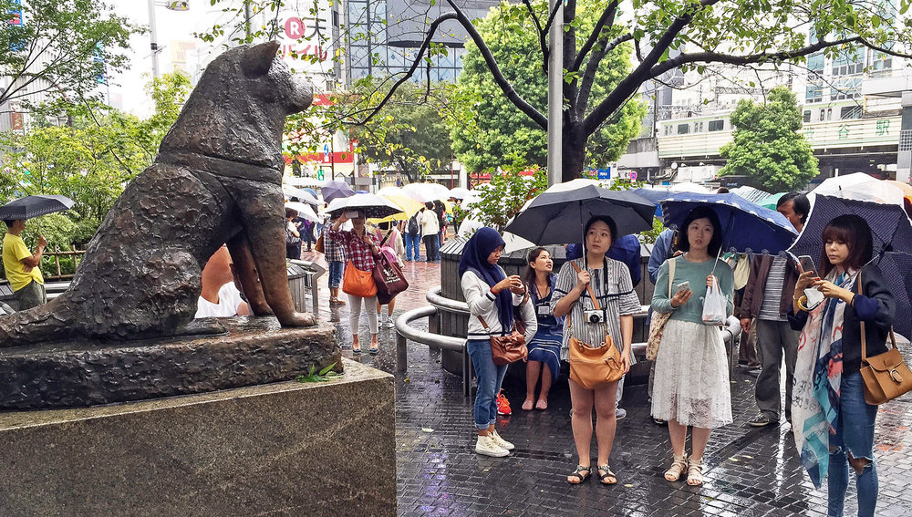 Rain or shine, Hachiko attracts many admirers. Image:  © Alan Williams