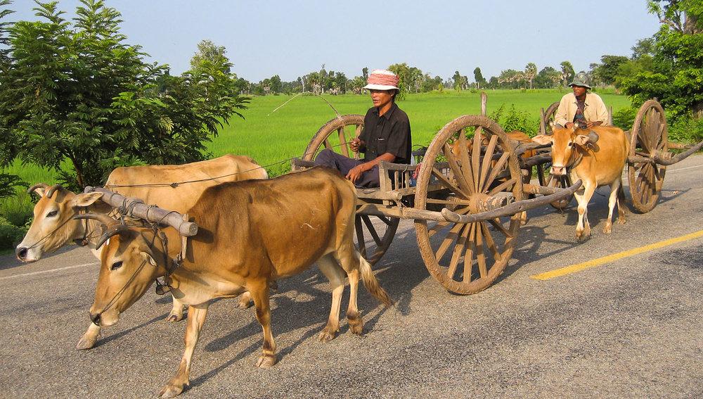 Traditional bullock carts in Cambodia. Image:  © Alan Williams