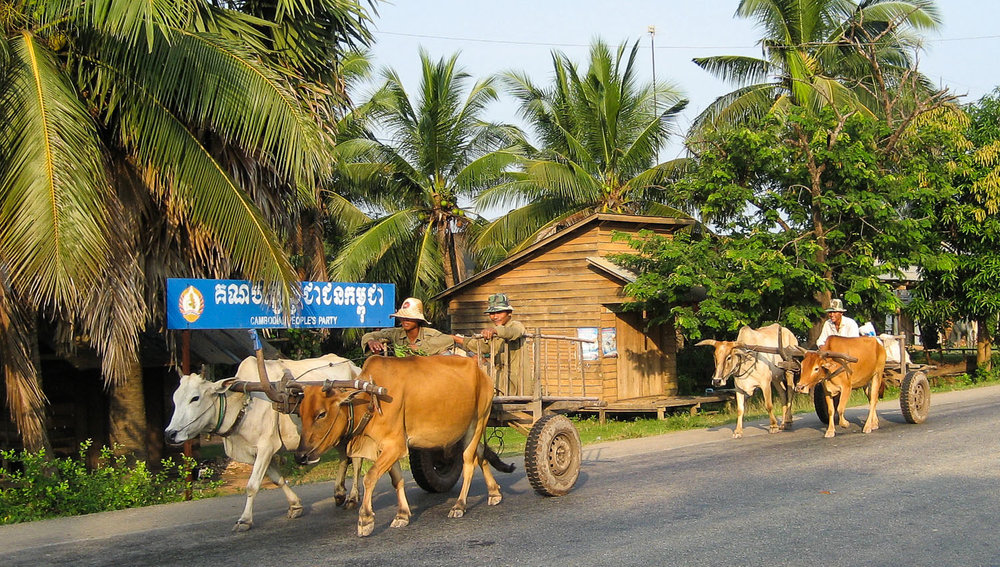Bullock carts with rubber tyres in central Cambodia. Image:  © Alan Williams