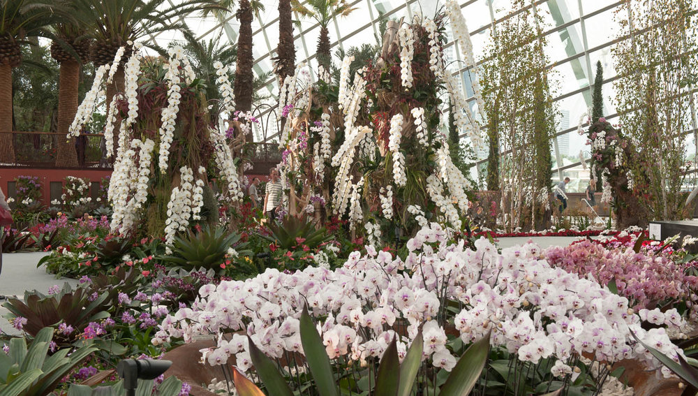 Orchids on display in the Flower Dome. Image:  © David Astley