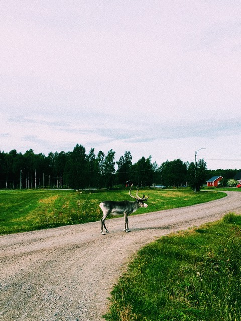 Joakim listens while walking in Kalix, Sweden, not far from the Arctic Circle.