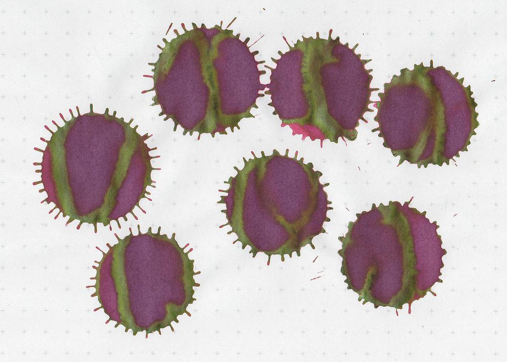 fc-sweet-maroon-4.jpg
