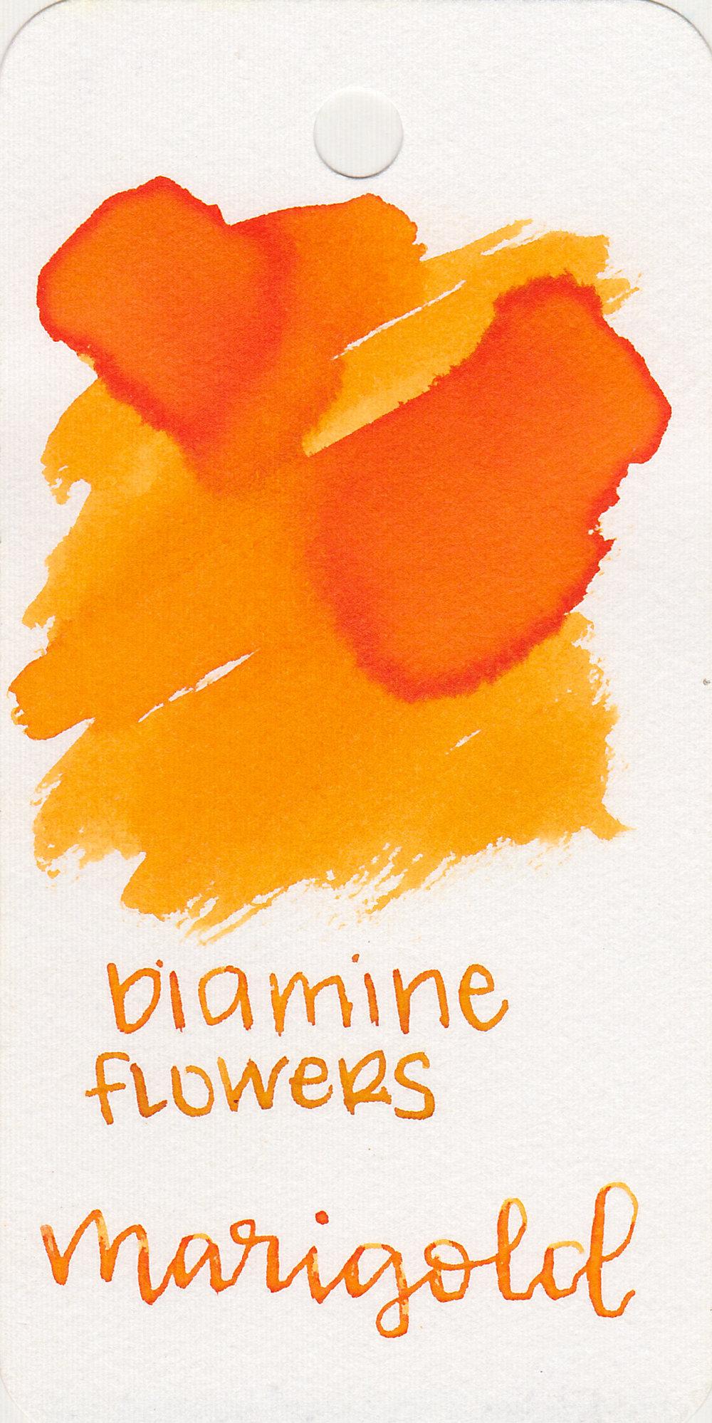 d-marigold-1.jpg