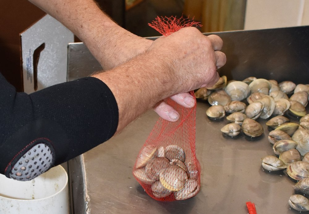 Hand Packed   All of our market shellfish are hand-packed to order and shipped in cooled containers. They are sized, packed in quantities to your specifications then shipped to our transportation hubs in refrigerated trucks.