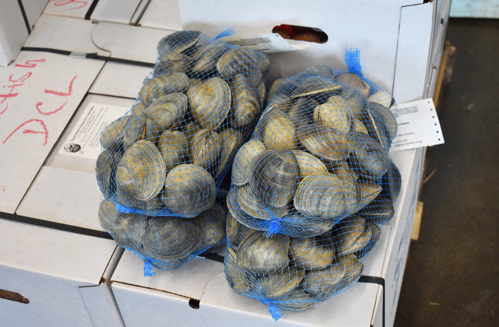 Market-Size Clams and Oysters   A.R.C. markets hard-shelled clams (quahogs) and oysters to restaurants, clubs, events, etc. Some are sold direct to the customer, most are sold in through wholesale shellfish distributors.