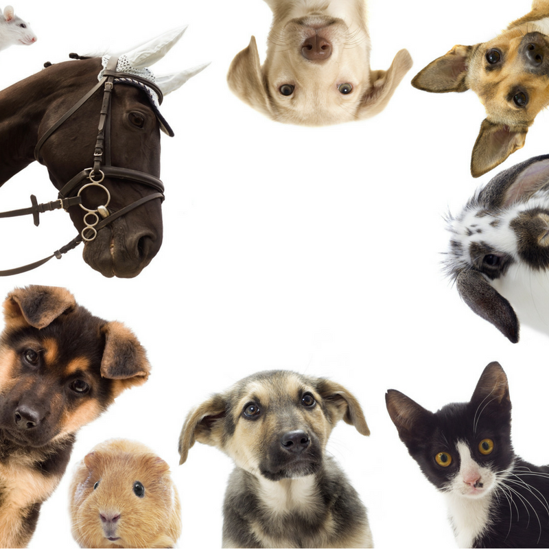 AnimalsSquare_SC(1).png