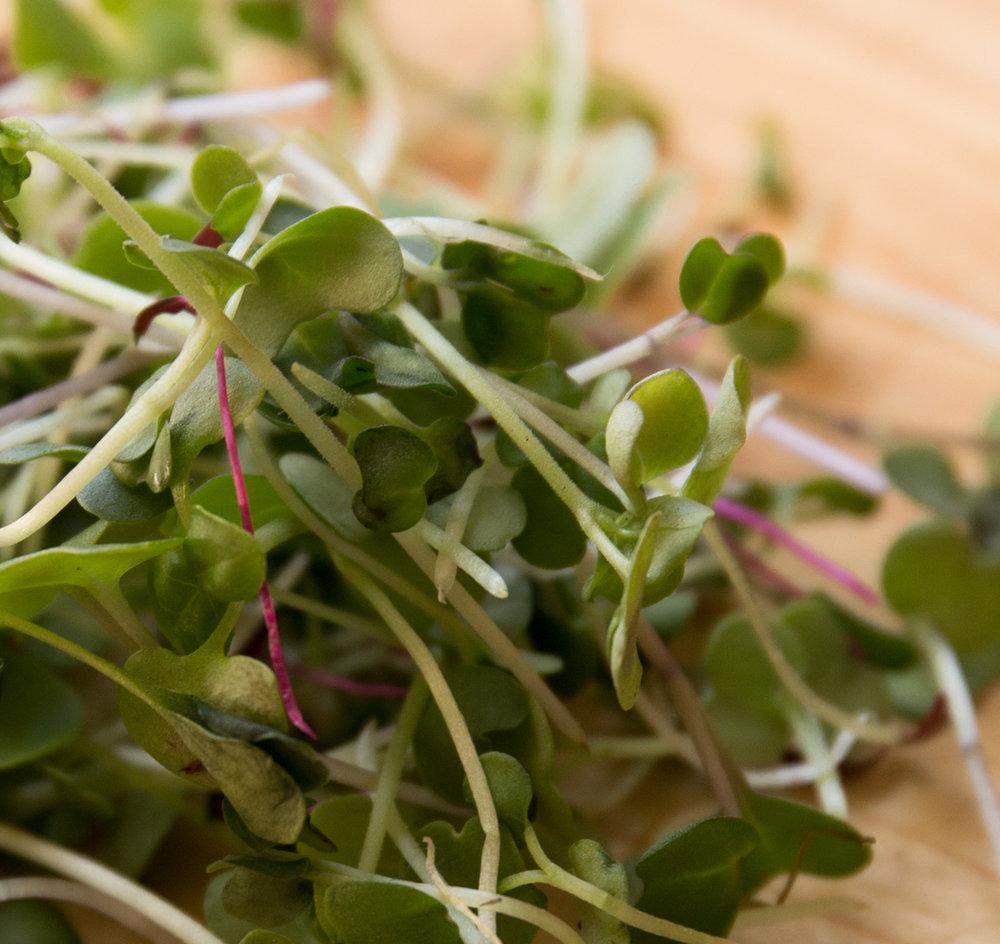 A Microgreen Parfait