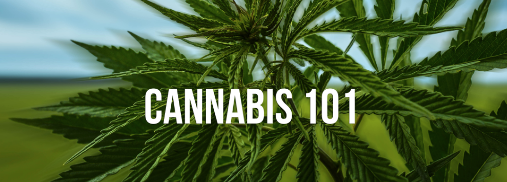 Join us for Cannabis 101 classes every Monday + Wednesday at 10am and 2pm. Fridays at 4:20pm, each class lasts about 30 minutes. Ask the guards for Suite 101 and sign up 10 minutes before classes start. Opened for anyone to attend. Come ready to learn and get all your questions answered.