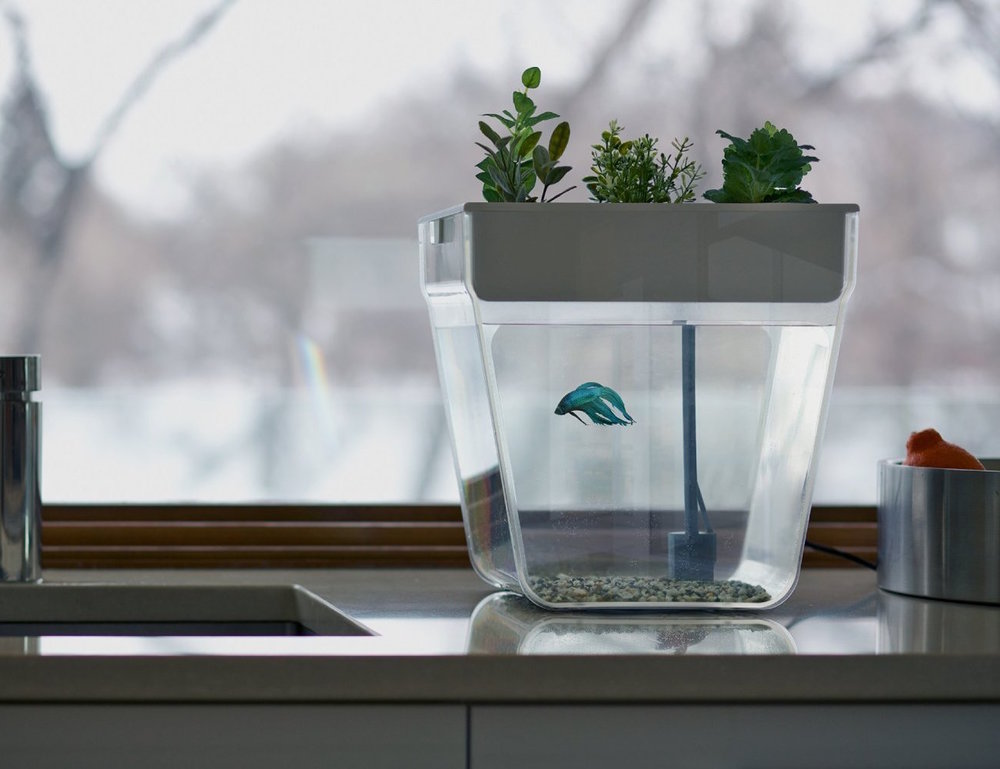Back-to-the-Roots-Water-Garden-and-Fish-Tank-02.jpg