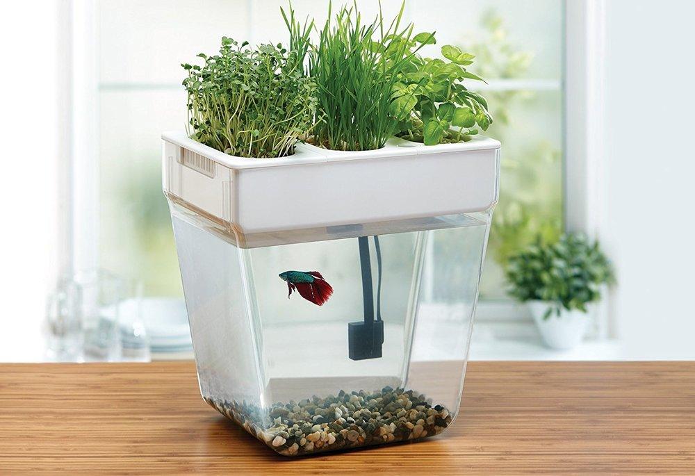 Water Fish Tank 2.0   $ 110