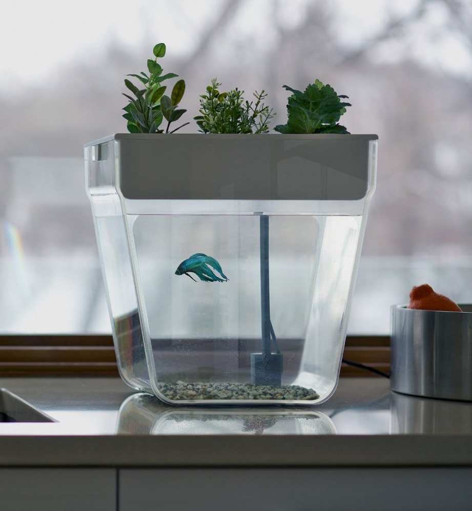 Water Garden - The fish tank is self-cleaning, so you won't have to worry changing the water again and again.The waste of the fish fertilizes the plants and the weeds take cares of the cleaning. You can grow five different plants you like in a super convenient way.