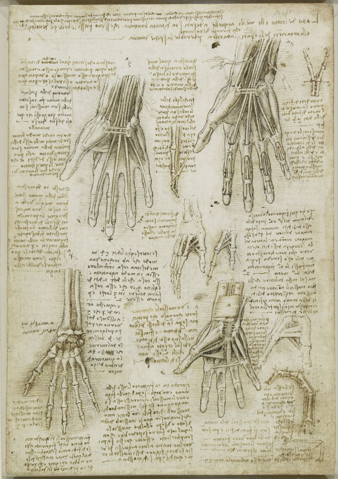 Anatomical Study Da Vinci.jpg