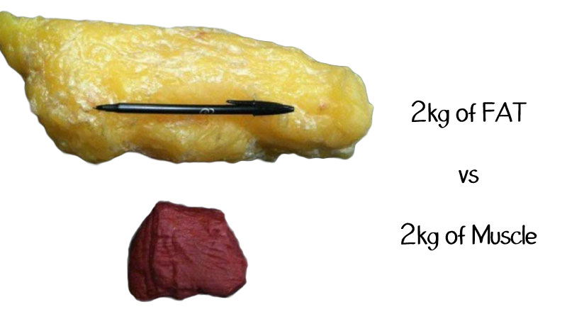 fat-vs-muscles.jpg