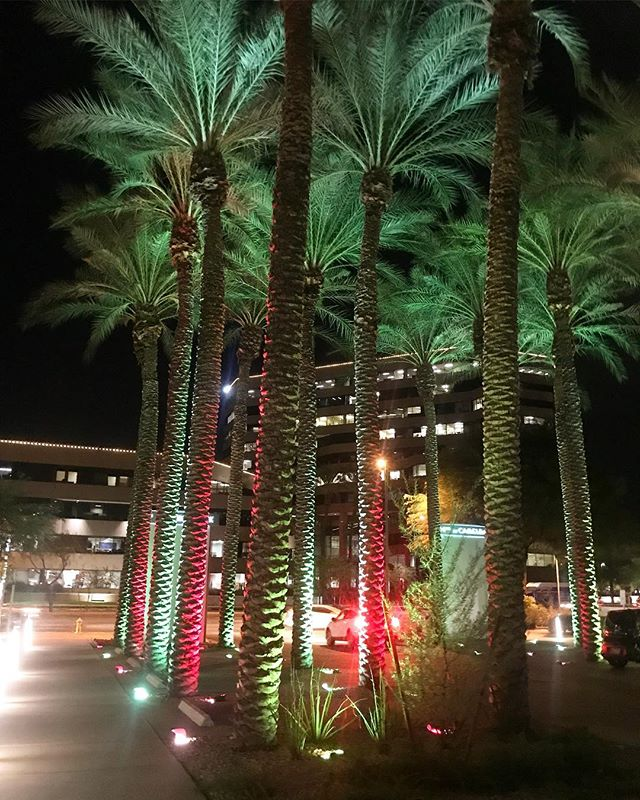 Fieldwork Finds: how Phoenix does holiday lights 🌴✨🎄✨🌵✨#ontheroad #fieldwork #qualresearch #agencylife #tistheseason #AZ #phoenix