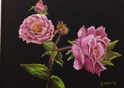 Roses in my garden.JPG