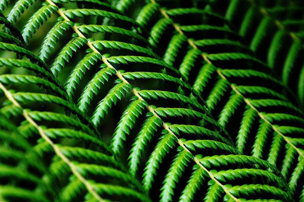 DIDIER RIVA 'SPIRIT OF NATURE' -