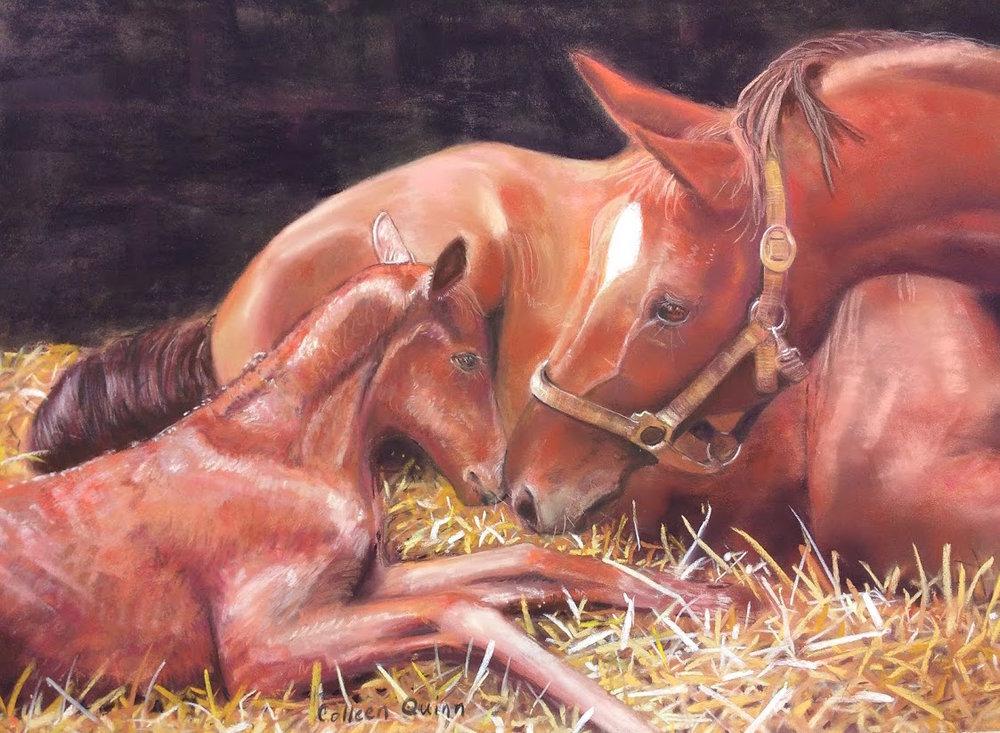 NewFoal.CQuinn.jpg