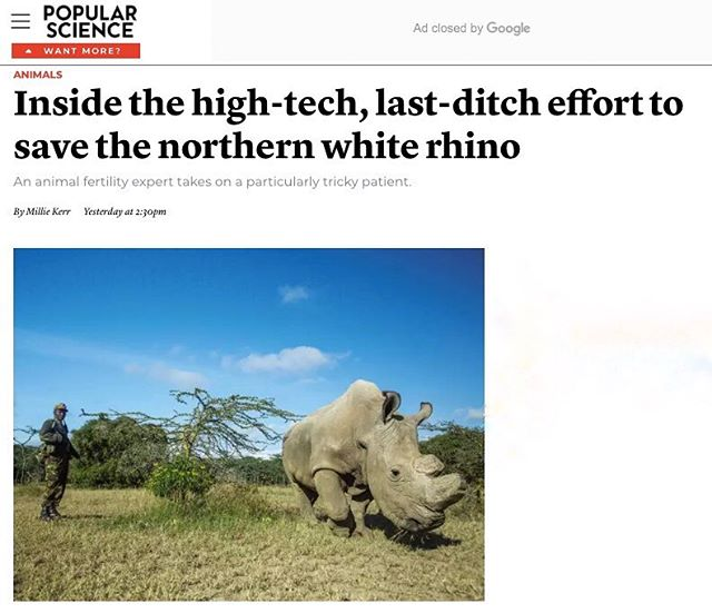 You've probably heard that the northern white rhino is extinct in the wild and almost gone from the planet, but did you know that scientists are working to save the subspecies? Find out how by reading @millieckerr's article in Popular Science magazine (currently online at popsci.com). . . . . #Africa #olpejeta #olpejetaconservancy #rhino #whiterhino #northernwhite #northernwhiterhino #kenya #conservation #wildlifeconservation #animals #laikipia #popsci #popularscience #popularsciencemagazine #endangeredspecies #wanderourwild #stopwildlifetrade #illegalwildlifetrade #rememberingsudan @popsci