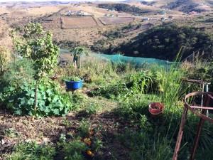 Willen & Doen Permaculture Project.