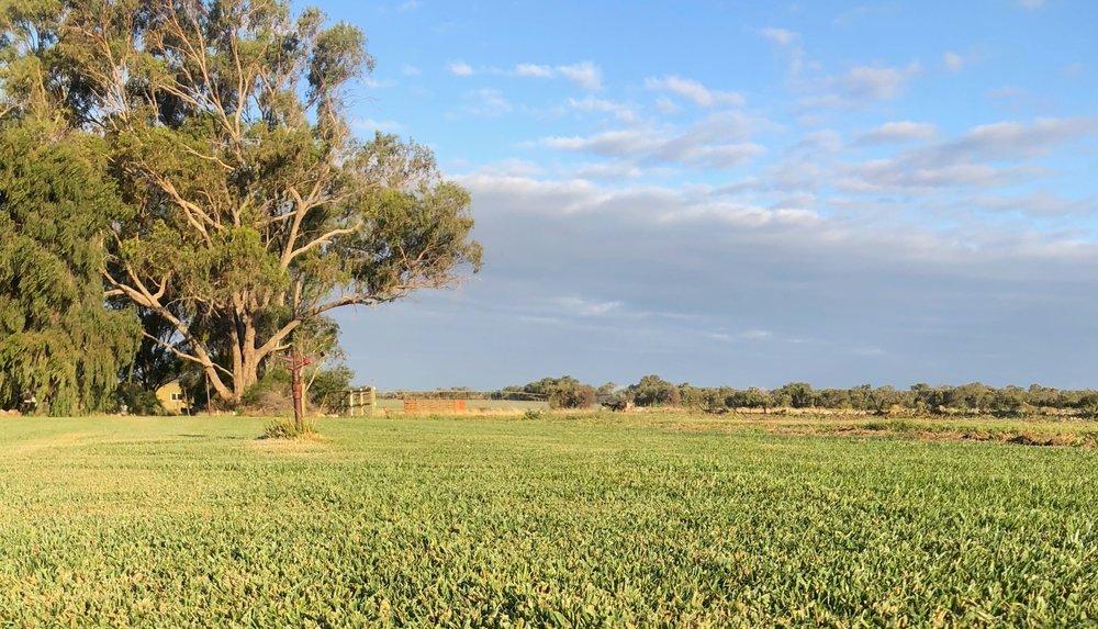 gingin turf farm