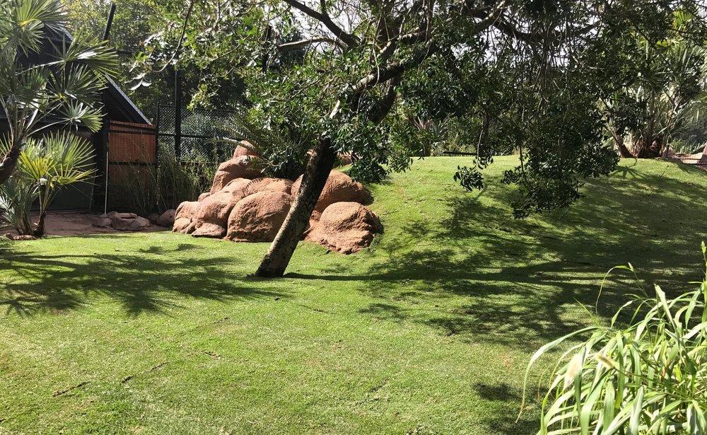 perth zoo, lion enclosure, kikuyu