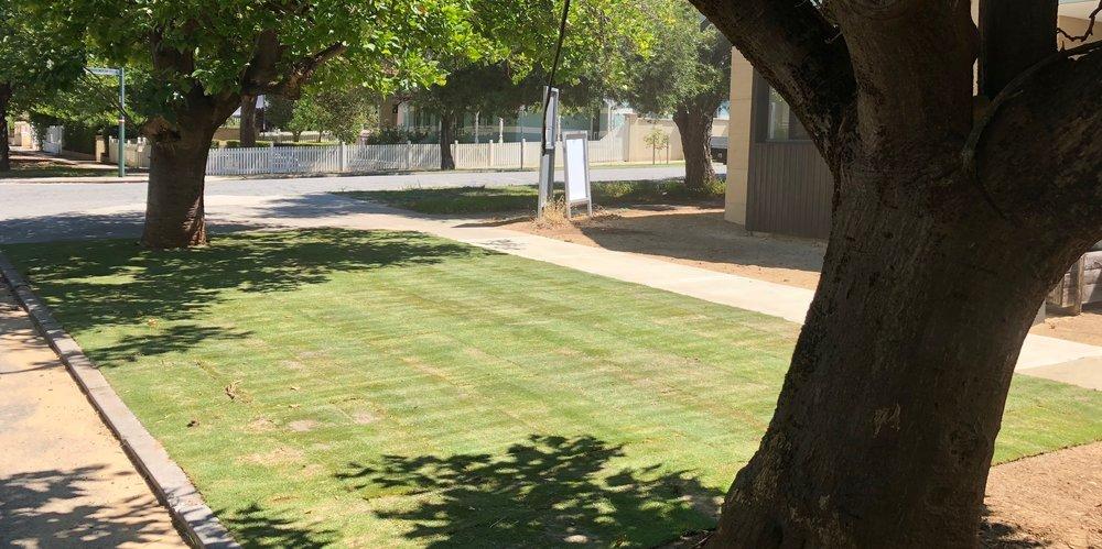 Wintergreen Lawn - West Leederville
