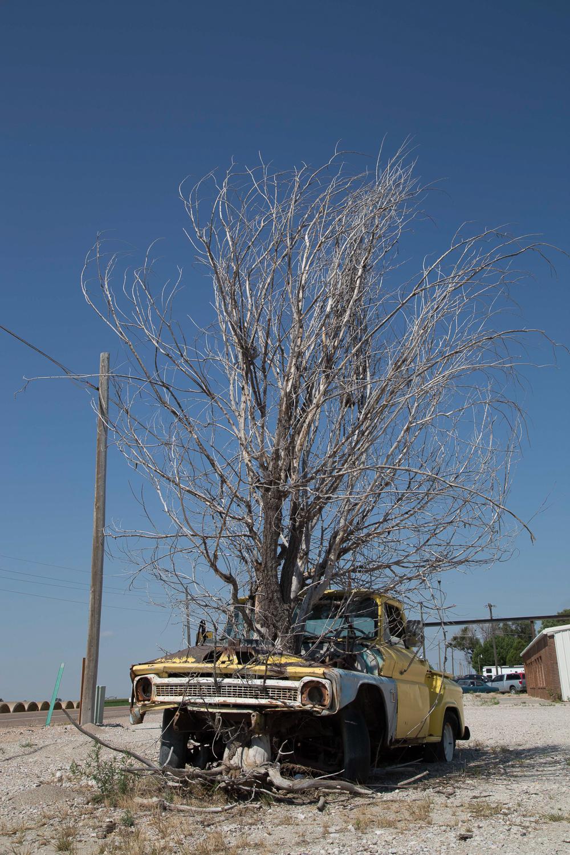_MG_0716__36_Car_treeweb_1500.jpg