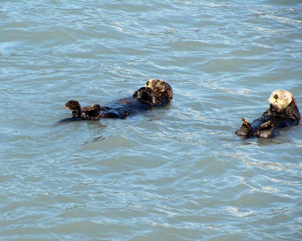 otters-416834_960_720.jpg