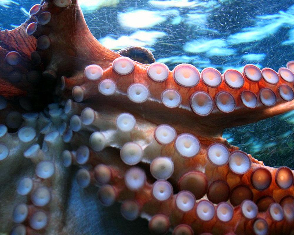 octopus-250101_960_720.jpg