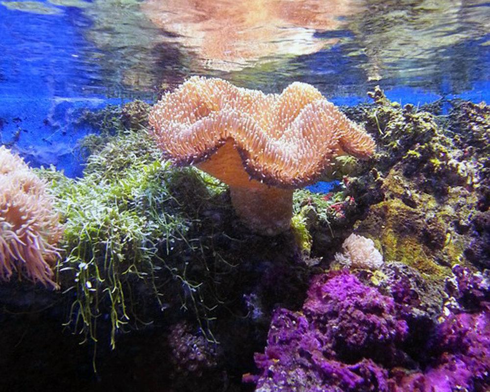 coral-457251_960_720.jpg