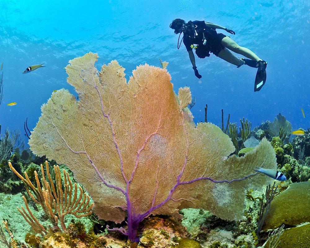 diver-79597_960_720.jpg
