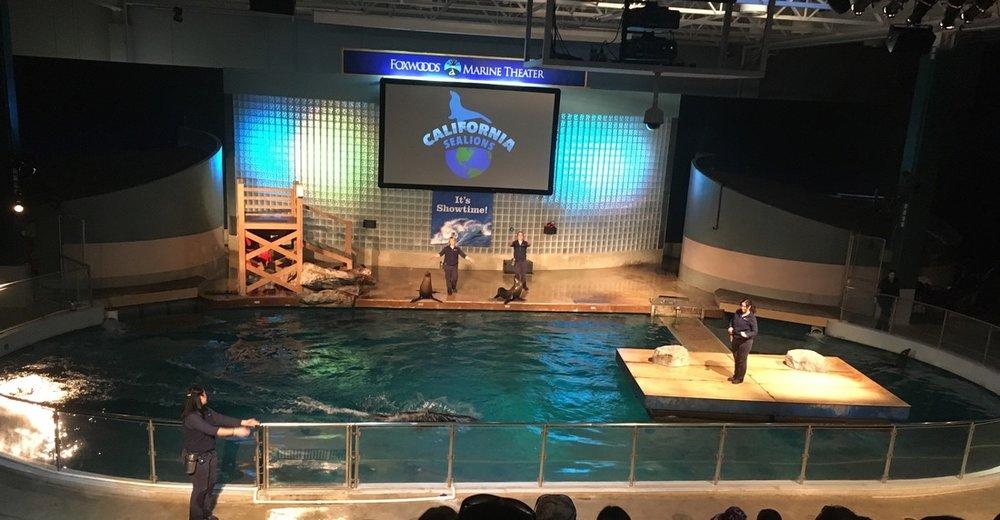 California Sea Lion Show 4.jpg