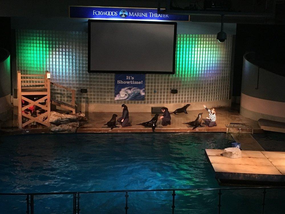 California Sea Lion Show.jpg