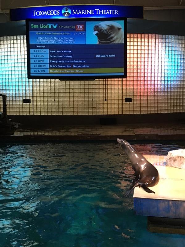 Califronia Sea Lion Show.jpeg