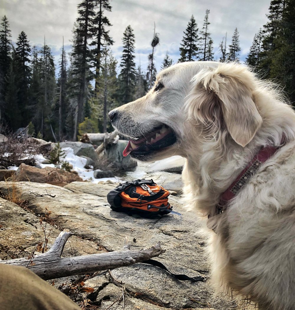 Emma - I'd be remiss if I didn't mention Emma, my faithful companion. We spend many days at the river and she's been spotted in Desolation Wilderness (pictured) near Lake Tahoe, with a big smile on her face.