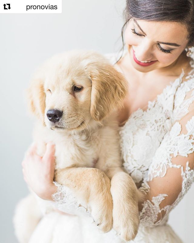 When @pronovias shares an image of one of our stunning #MGCrealbrides... Clearly a #repost is needed! ・・・ #NewYearNewYou… New Pup! What a special wedding day moment ❤️ Pictured: real bride Danielle with her puppy. Photo: @chloeluka via @mariegabrielcouturebridal