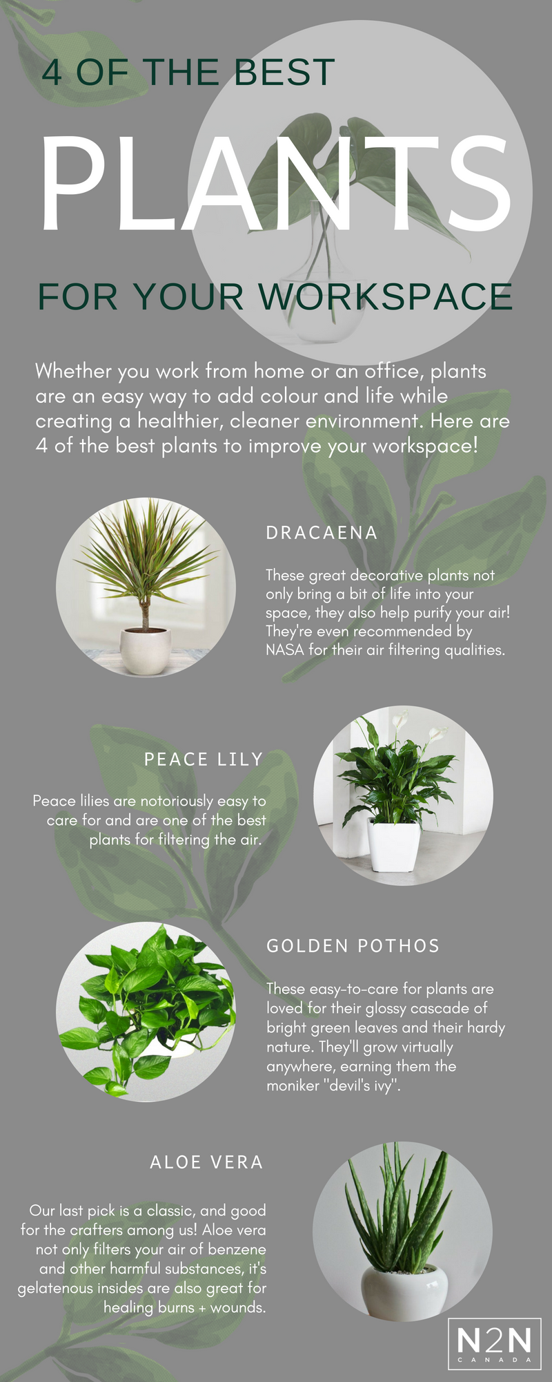 Plants to Improve the workplace (2).png