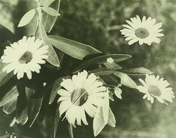 botanical08.jpg
