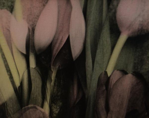 B-tulips.jpg